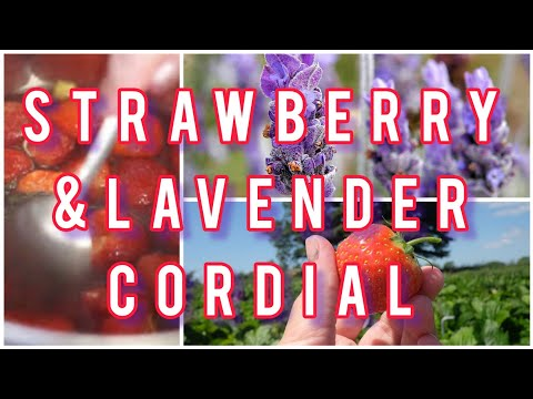 How to make homemade strawberry cordial or syrup with lavender