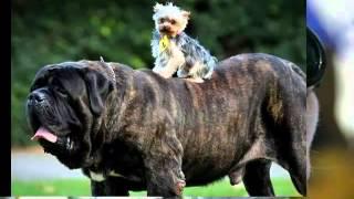 Собака - лучший друг человека.mp4