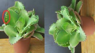 Planta que Combate o Câncer – A maravilhosa planta foi descoberta