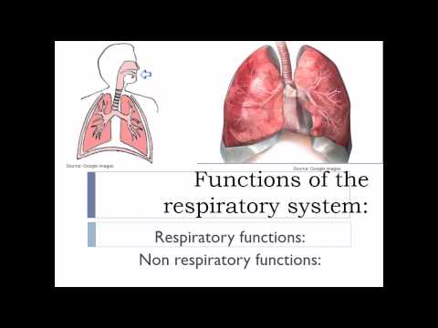 RESPIRATORY SYSTEM - FUNCTIONS - YouTube