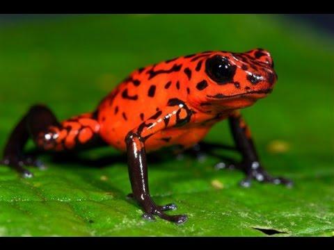 Самые необычные животные: фантазия природы