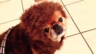 🤣 DOGS HATE HALLOWEEN 🐶 - Awesome Funny Pet Animals Life Videos 2019😇