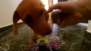 Popular Videos - Toys & Dogs