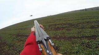 Охота на фазана - Фазан пытается обдурить собаку - Охота с дратхааром - Фазан в бронежилете 2