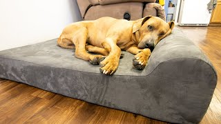 The Big Barker Dog Bed [Review]