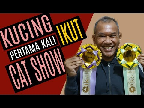 Cat Show Indonesia 2019