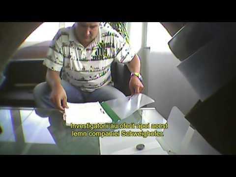 Holzindustrie Schweighofer & Illegal Timber