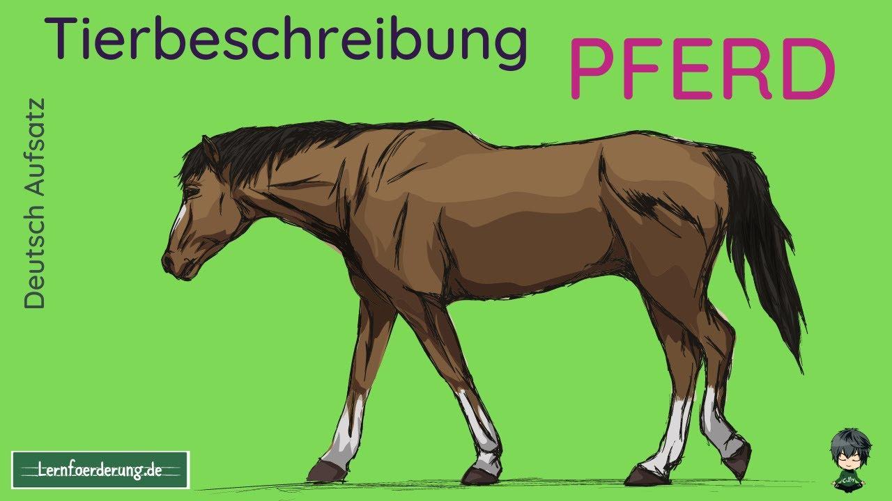 Tierbeschreibung Pferd   Beispiel für die nächste Klassenarbeit