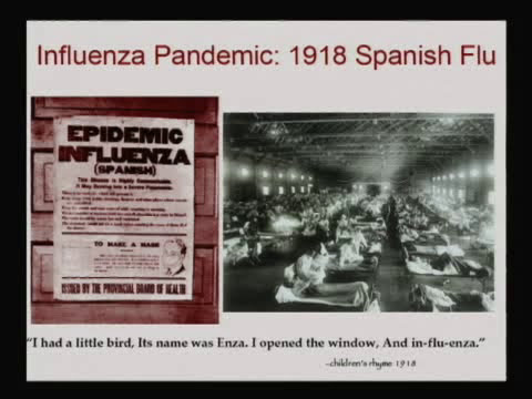 H5N8: Russia tells WHO it has detected first case of avian flu strain ...