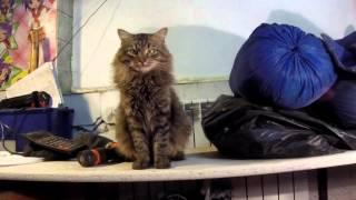 Кошка, Кот и их Котята