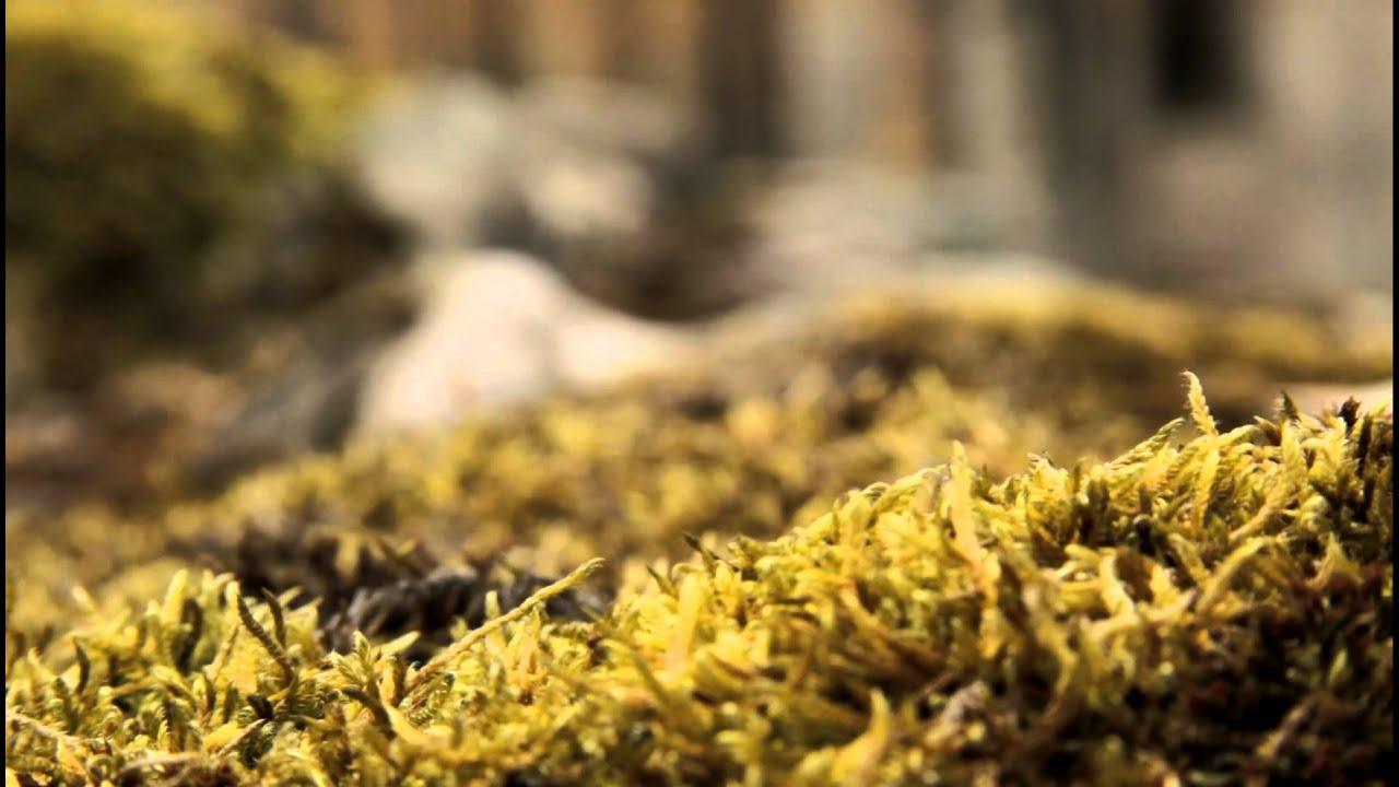Old Moss Macro shot Rack Focus - Canon 7D - YouTube