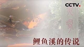 [中华优秀传统文化]鲤鱼溪的传说| CCTV中文国际