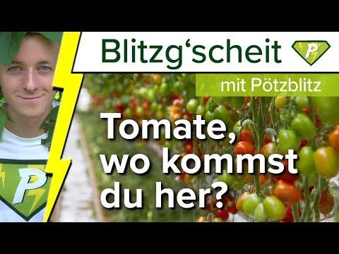 Wo Kommt Die Tomate Her