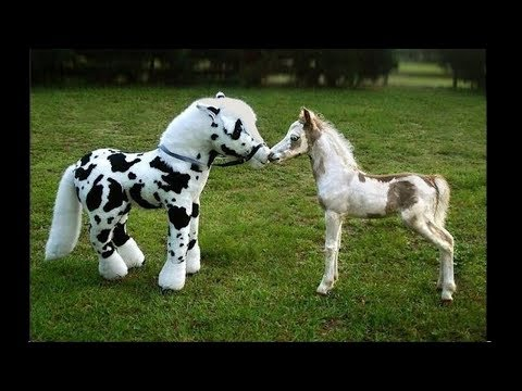 Cute And Funny Horse Videos Compilation 'Little Pony in Real Life' - Soo Cute! #2