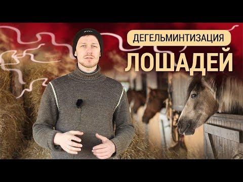 Дегельминтизация лошадей