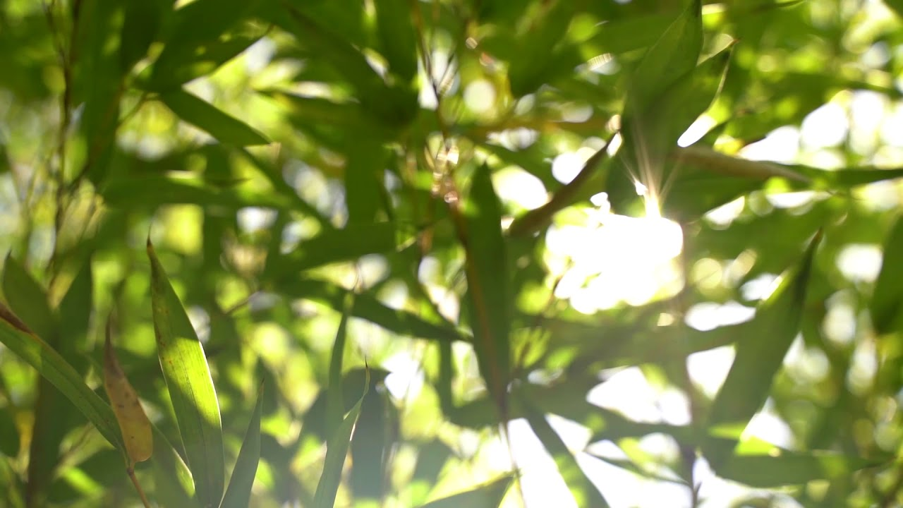 Free stock footage leafs sun slow motion video Free download