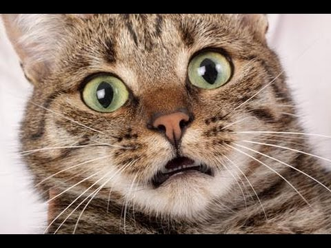 Scaredy Cat Compilation