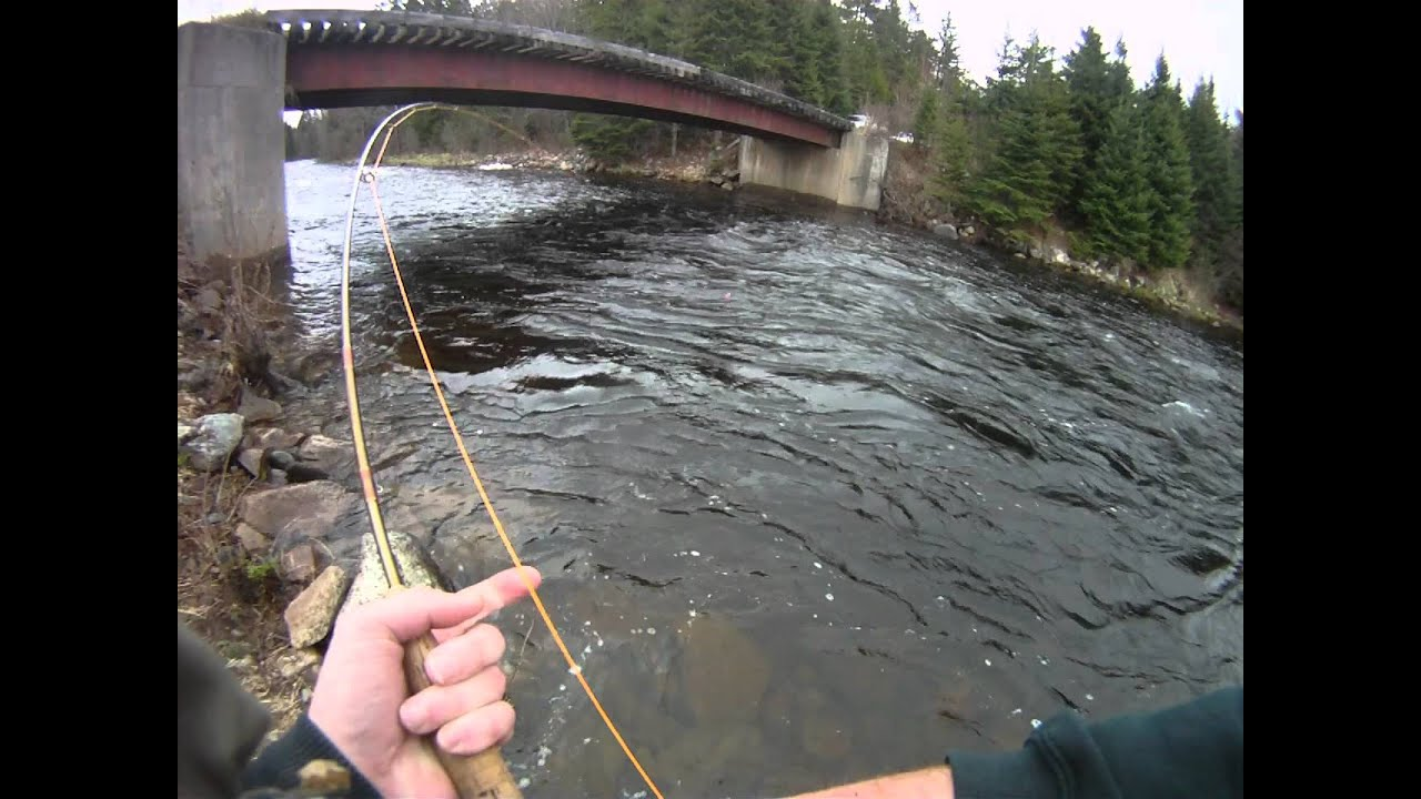 Maine brook trout youtube for Fishing license maine