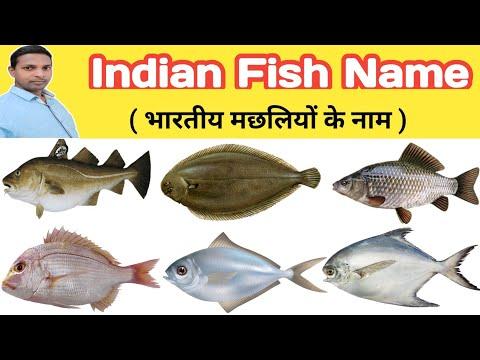 Indian Fish Name | Name Of Indian Fish | Fish Name | मछलियों के नाम