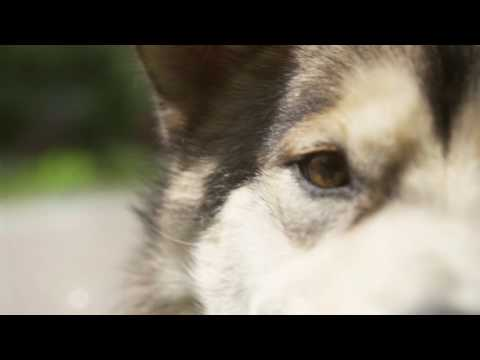 The Residences Presented by Four Seasons Whistler & Maola the Resort Dog