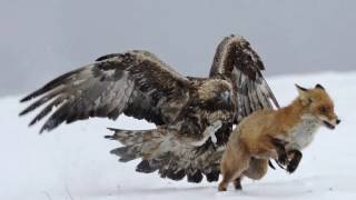 [Best Animal Fights]  [Wild Animal Attack]  26 Scary Animal Attack Photos