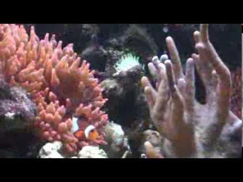 Reef Tank - Mein Riff-Aquarium - Der Stresskiller