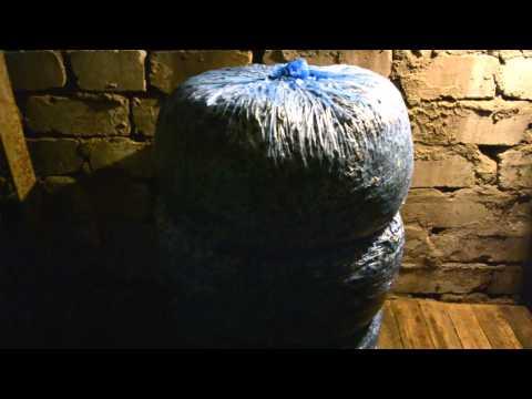 выращиваем грибы вешенка в мешках видео
