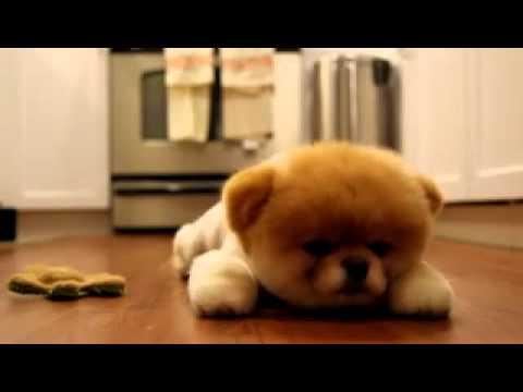 Объявления о продаже взрослых собак и щенков в иркутске: немецкие овчарки, лабрадоры, хаски, чихуахуа, джек рассел терьеры, бульдоги, шпицы по доступным ценам. Купите породистого щенка недорого на юле.