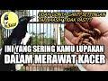 Sibuk Mencari Settingan Kacer Ini Yang Sering Di Lupakan Oleh Kacer Mania Pemula Dr Kacer  Mp3 - Mp4 Download