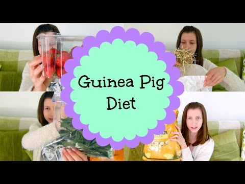 The Components of a Guinea Pigs Diet