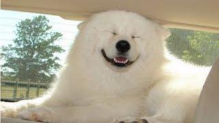 Видео про домашних животных. Смешные приколы