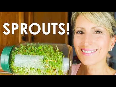 HOW TO GROW SPROUTS AT HOME - EASY & CHEAP!