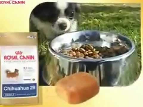 Royal Canin Chihuahua 28 Youtube