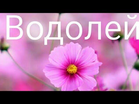 Водолей Тороскоп с 13 августа по 16 августа 2018 г.