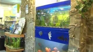 породы аквариумных рыб: барбус . Все О Домашних Животных.
