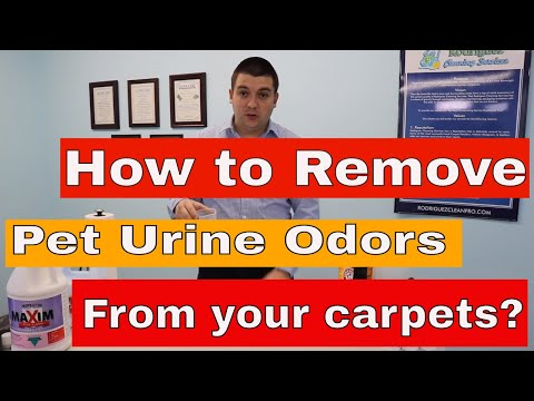 How To Remove Pet Urine Odor From Your Carpets?