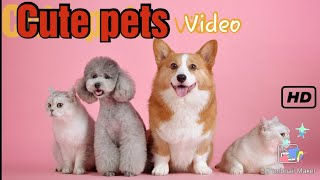 Cute pets kitten, puppies video's