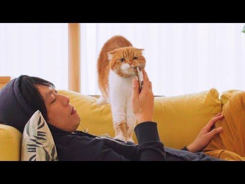 배고픈 고양이들이 주인에게 밥을 얻어내는 방법