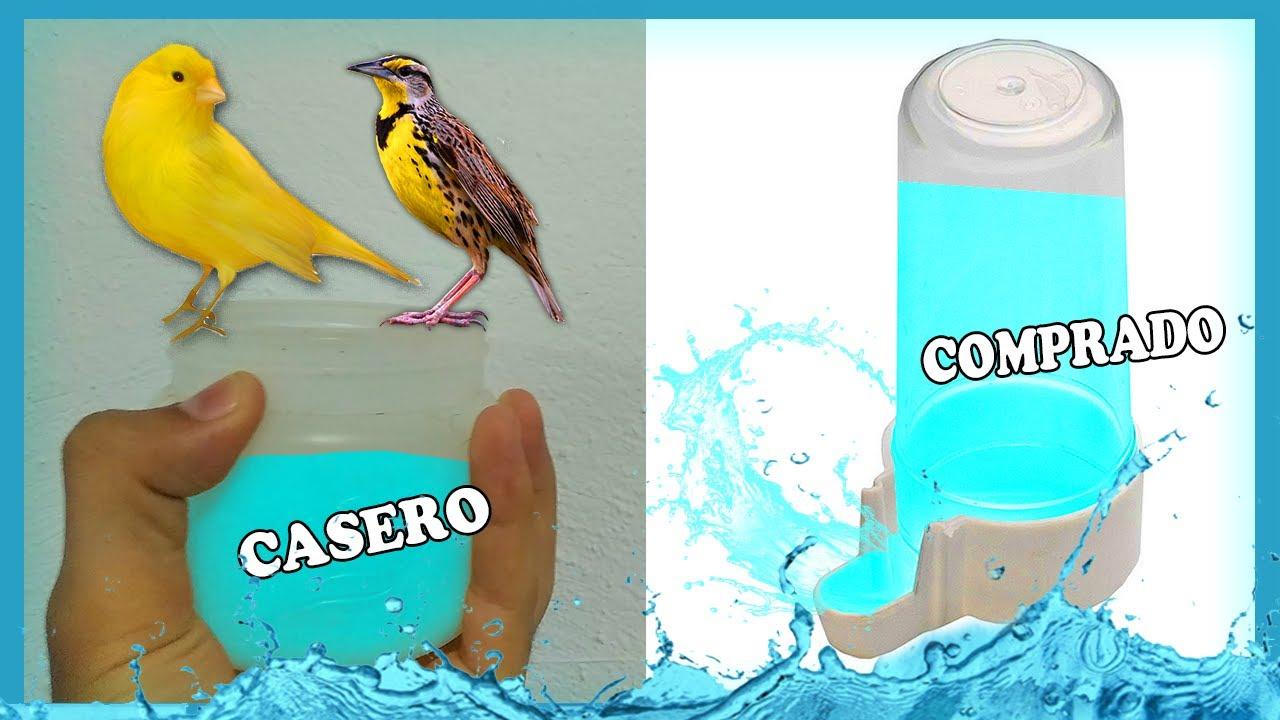 Que Bebedero le debo colocar a mis pájaros