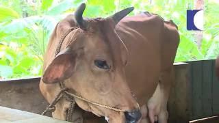 NRI Pradeep's Vastu cleared farm in Mulavana | HARITHAM SUNDHARAM 17-06-2016 | Kaumudy TV