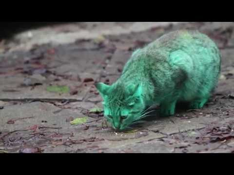Feline a little green! Meet the GREEN cat of Bulgaria (Part 2)
