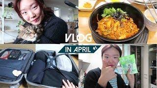 4월:VLOG   멍냥이와 함께   새로운 다이어트 식…
