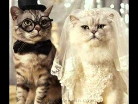 Nous Vs Souhaitons Et Bon Et Heureux Anniversaire De Mariage Wmv