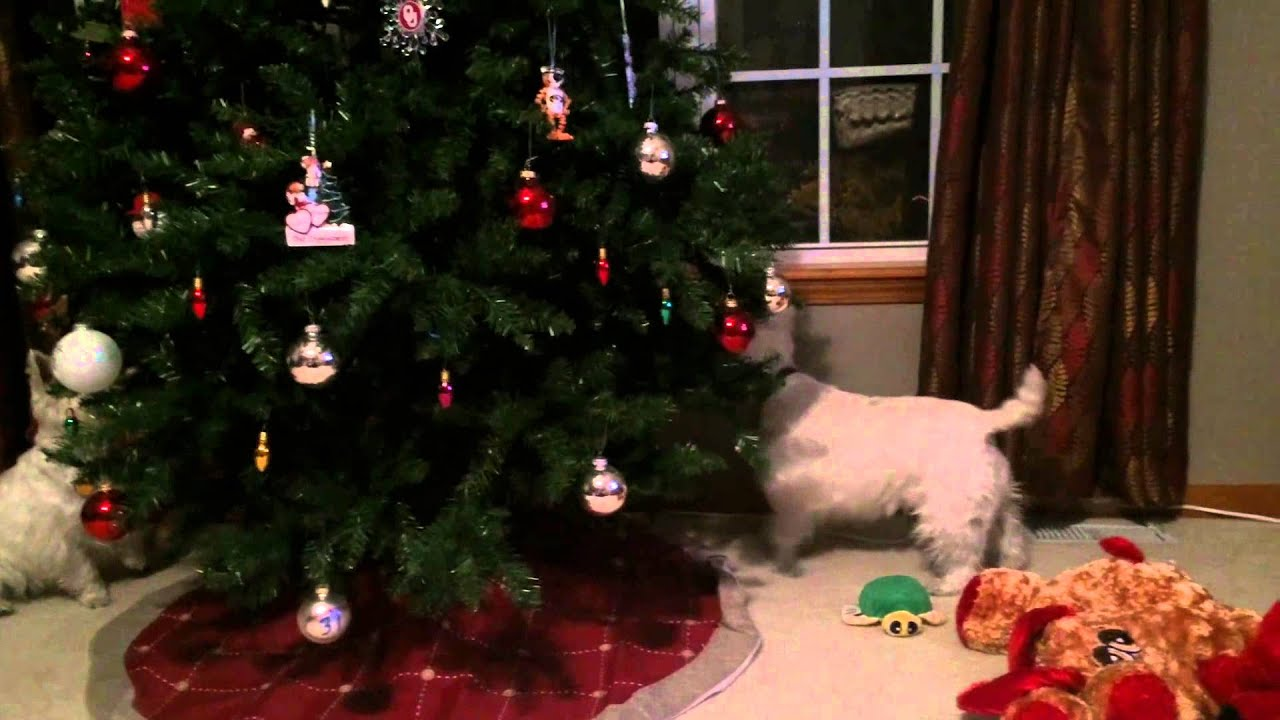 A Westie Christmas - YouTube