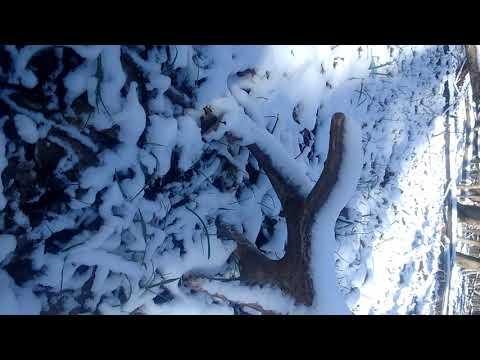 Поиск рогов Белгородская область 2020