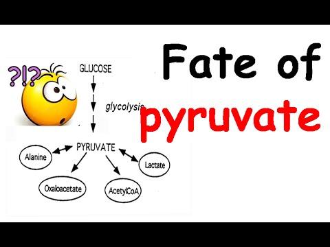 Fate of pyruvate