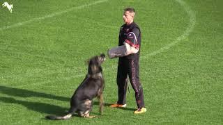 Winner 2018 WUSVWM Václav Ouška and Qvido Vepeden WM IGP World Cup C in Randers, Denmark
