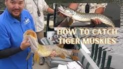 Tiger Muskie Tips & Tactics on Newman Lake, Washington