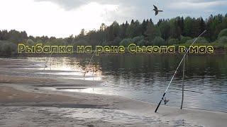 Рыбалка на реке Сысола в мае Первые трофеи на фидер