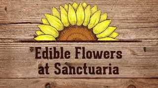 Edible Flowers at Sanctuaria Wild Tapas - Bloomtown TV Ep. 3